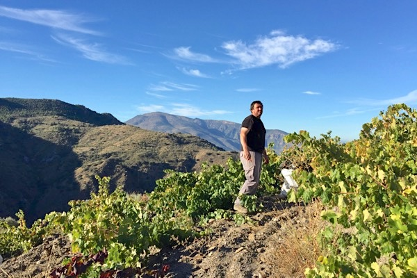 Juan Esteban bei der Weinernte in der Alpujarra Alta