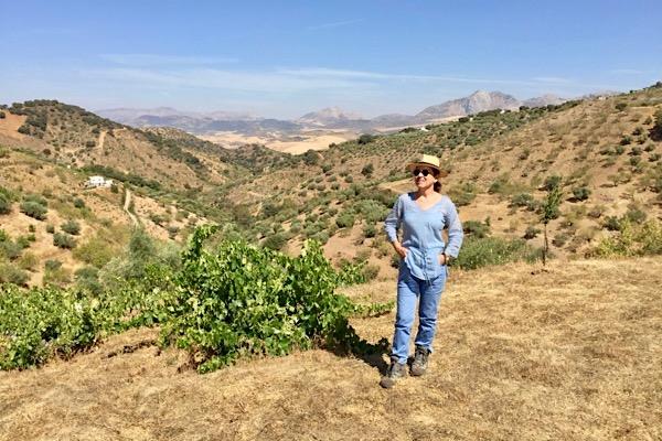 Mit Victoria Ordoñez und alten PX-Reben in den Montes de Málaga. Andalusien
