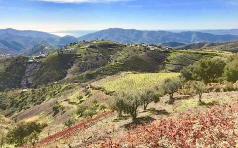 Sedella-Weingut mit Blick aufs Mittelmeer, Costa del Sol.
