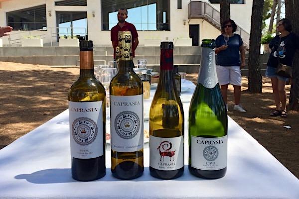 Klasse Weine aus Bobal, Merlot, Macabeo und Chardonnay, darunter rechts ein Schaumwein Brut Nature mit D.O. Cava Herkunftsangabe.