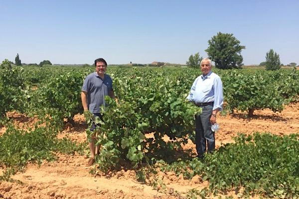 Weinmacher Rodolfo und sein Vater Andrés Valiente in einem alten Bobal-Weinberg von Bodegas Vegalfaro