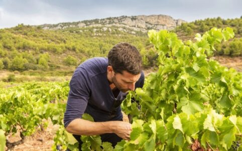 Dominik Huber, Terroir al Limit