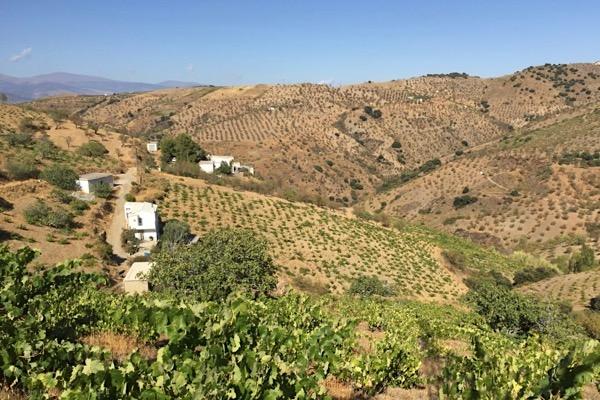 Das Weingut Garcia de Verdevique in der Sierra de la Contraviesa