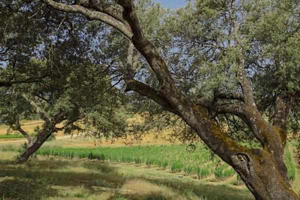 Finca La Melonera ist ein 200 Hektar großes Anwesen, in dem sich 30 Weinparzellen verteilen.