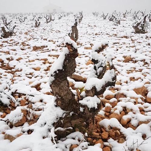 Bajo Aragón hat ein kontinentales Klima mit strengen Wintern und heißen Sommern.