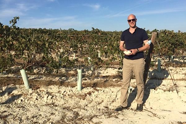 Weinlage von Huerta de Albalá nahe Jerez mit den typisch weißen Albariza-Kalkböden.