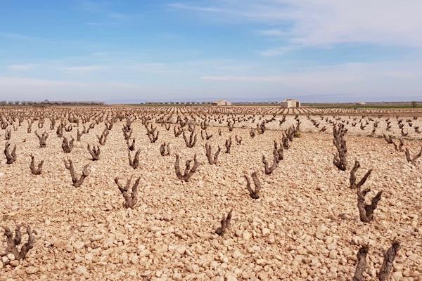 Weinlage von Tempore in Bajo Aragón