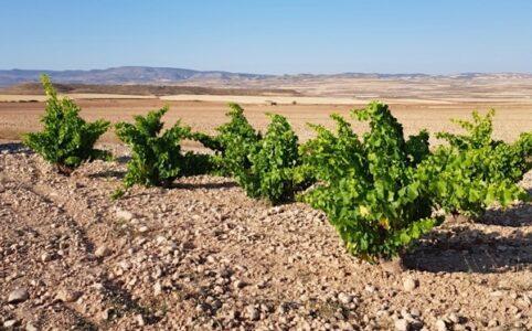 Weinberge Bodegas Tempore, Bajo Aragón