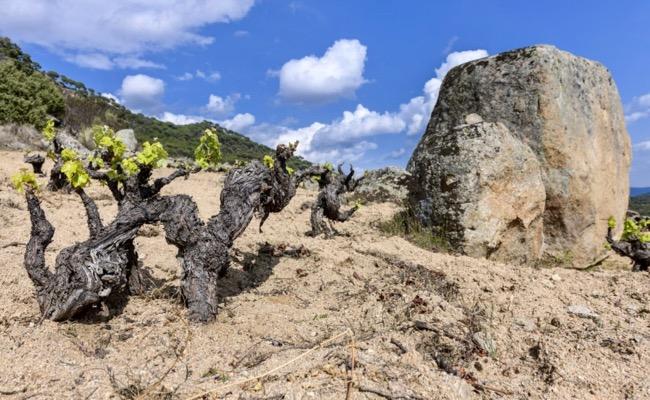 Weinlage von Soto Manrique in der Sierra de Gredos, DOP Cebreros. Top Weine aus Spanien.