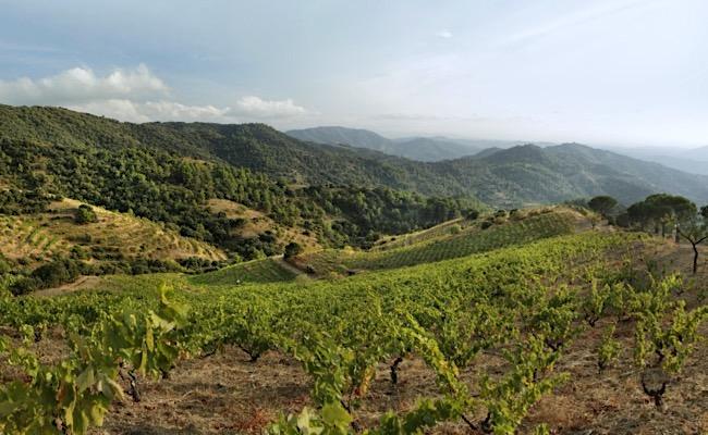 Les Tosses, Weinlage von Terroir al Límit. Mit alten Cariñena-Reben im Priorat.