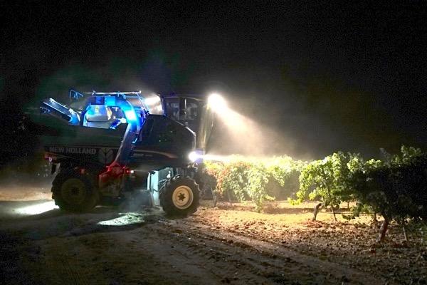 Viele Betriebe in Rueda führen die Weinlese nachts mit dem Vollernter aus.
