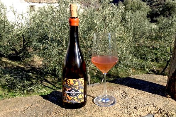 Orange Wine, Microbio, Rueda