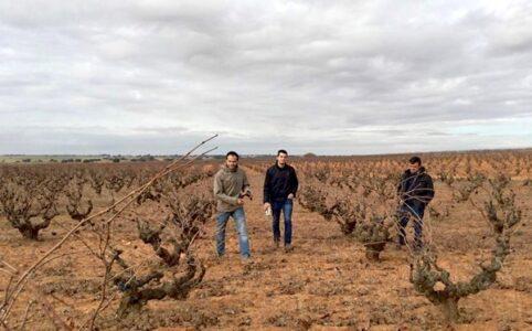 Ponce, im Weinberg in Manchuela