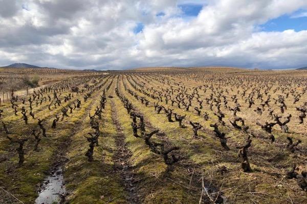 Weinlage von Losada im Bierzo