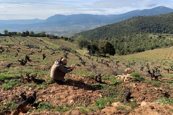 In der Weinlage La Mira in Cebreros, Sierra de Gredos