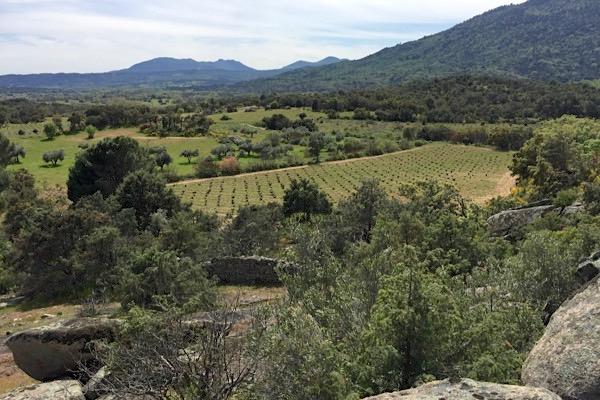 Blick auf einen Weinberg von Bodegas Bernabeleva, D.O. Vinos de Madrid