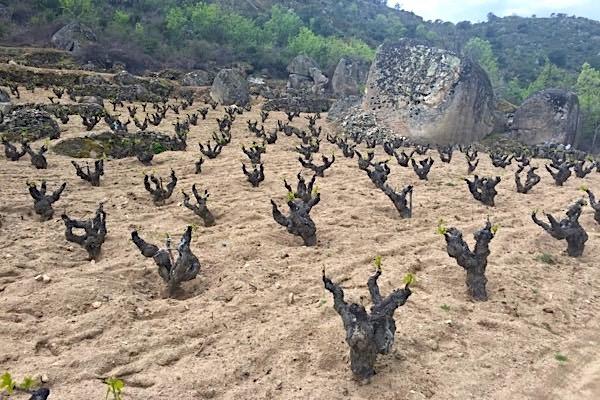 Feiner Granitsand bei Rico Nuevo, D.O.P. Cebreros, Lage El Sotillo. Sierra de Gredos.