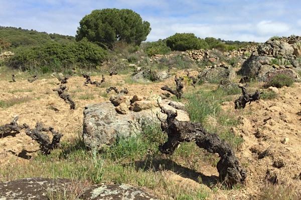 Weinlage Valverde von Soto Manrique, D.O.P. Cebreros
