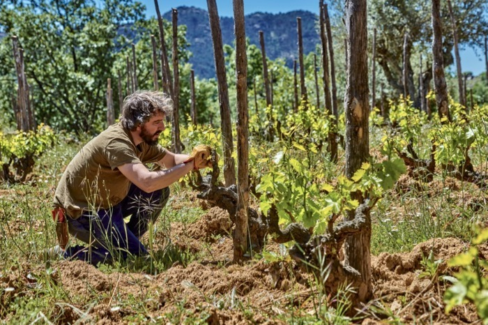 Daniel Landi beim Grünschnitt in der Parzelle Las Umbrias.