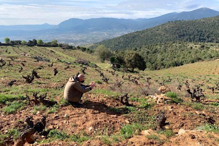 Im Weinberg La Mira von Soto Manrique, Cebreros