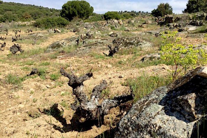 Weinlage Valverde. Für den Wein Las Violetas. Soto Manrique. Sierra de Gredos.