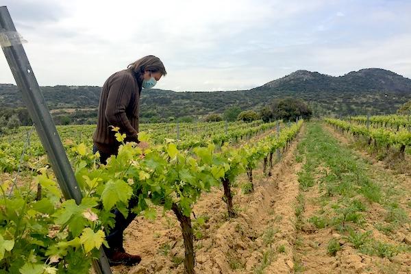 Ricardo Moreno in einem seiner Weinberge mit Albillo Real nahe Cadalso.
