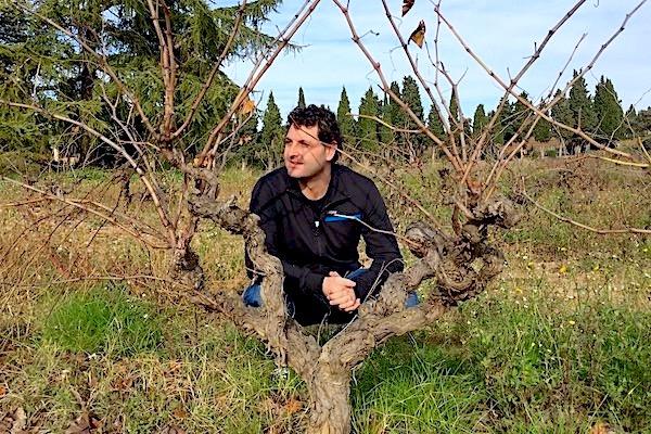 David Seijas mit einer 50 Jahre alten Xarel.lo-Rebe in Penedés.
