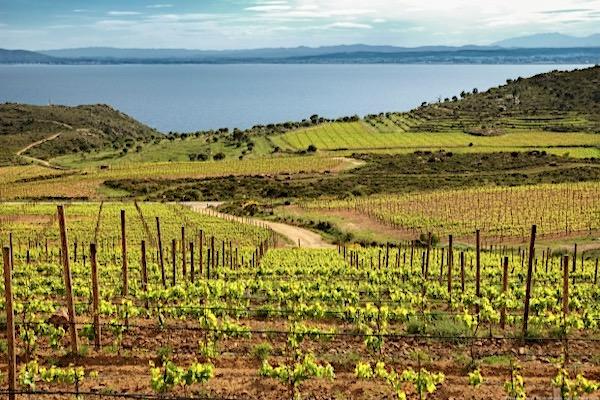 Dieser Weinberg im Naturpark Cap de Creus gehört zu Espelt Viticultors, den Partnern von Gallina de Piel in der D.O. Emporda.