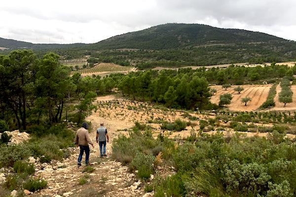 Der Berg im Hintergrund gehört bereits zu Kastilien-La Mancha.