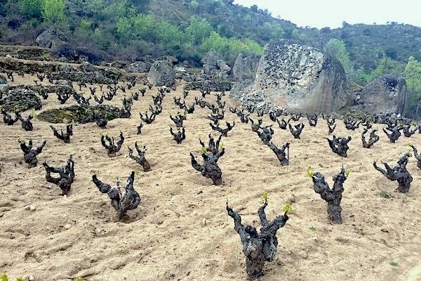 Gredos ist voller Granitblöcke. Obelix hätte seine Freude. Der Stein verwittert und vermischt sich mit dem Sand.